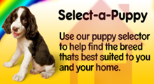 Select-a-Puppy