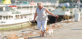 Exercise and senior dogs