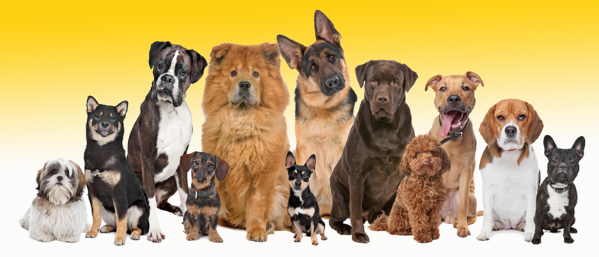 Dog Breed Picture Match