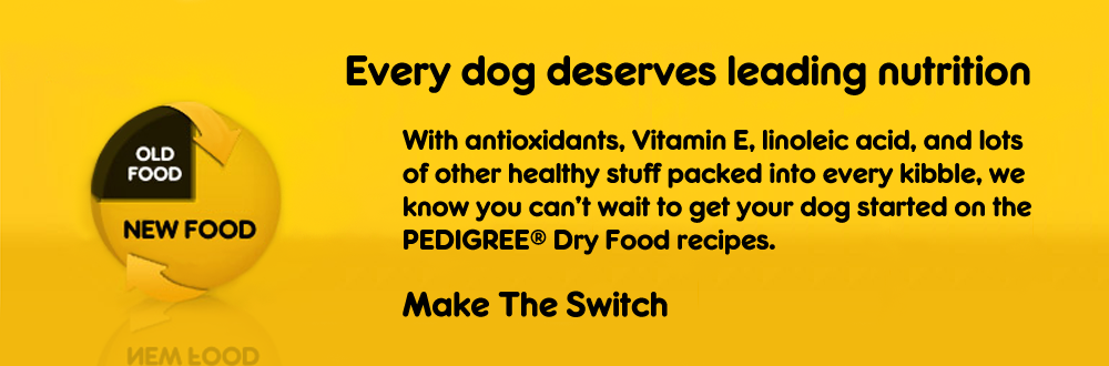 Learn how to switch your dog to our dry food