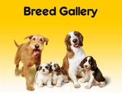 Breed Gallery