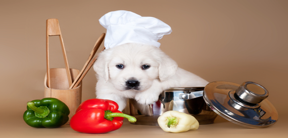 Nutritional needs of your puppy