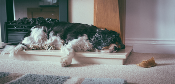 making your senior dog comfortable