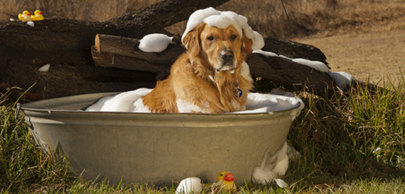 Heat therapy for senior dogs