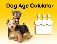 Dog Age Calculator