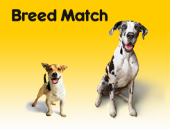 Breed Match