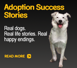 Adoption Success Stories