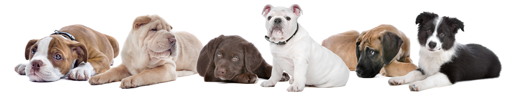 Select the right dog breed for you